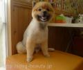 愛犬の美容室 プリティーmomo