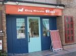 Dog Studio Rai