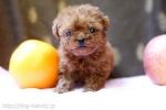 Petit Dog PICO