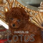 DOG SALON LOTUS