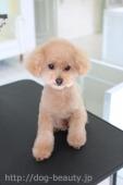 子犬っぽいぬいぐるみ風カットスタイル