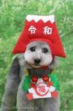 有限会社A HAPPY DOG LIFE