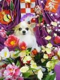 トリミンク゛サロン SWEENEY DOG