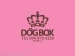 DOGBOX 中央橋店