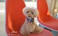 Dogsalon*Pety