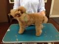 Dog Salon BUNTY