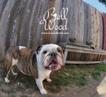 BELLWOOD PET HOTEL & SPA