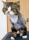 猫のすっきりカット