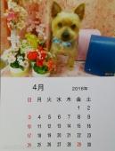 リニューアルオープン記念!マンスリーカレンダー撮影100円!