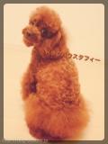 ドッグハウスタフィー (綱島 日吉 大倉山 菊名)