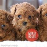 MIRU HOUSE