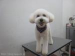 DOG&CAT salon 吉兆