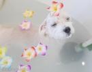 寒い季節はやっぱり、お風呂が一番ですね!血行促進で体の中からポカポカです♪