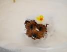 ホイップアロマバスに入浴したら、しっとりフワフワになって毛玉が出来づらくなりました♪