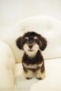 MIXのカットスタイル Doggie-Do