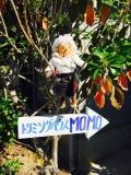 小型犬専門店 トリミングハウス・MOMO