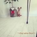 Dog salon Days