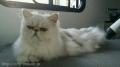 猫ちゃんのシャンプー&ハーブパック