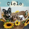 dog salon Cielo