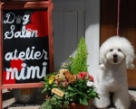 dog salon atelier mimi