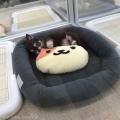 PET DESIGN 赤坂けやき通り店
