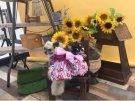 昨日は撮影会でした☆仕上がりがとっても楽しみです♪犬吉猫吉8月号掲載です!