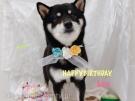 リーちゃん3歳のお誕生日おめでとう♪