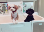 Dog Salon MoMo