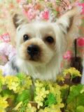 Dogsalon Ease (ドックサロンイース)