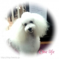 Dog salon One life