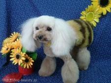 ミツバチカット