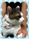 ♪ネコちゃん・シャンプーコース♪