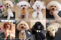 Dog salon Fabulous*