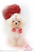 puppy☆Merry'sトップノット