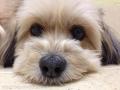 愛犬の宿らるご