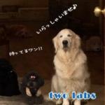 ツーラブズ(twolabs)〜関西学院正門前ドッグサロン〜
