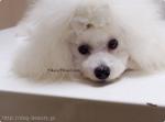 犬の美容室 キャロン