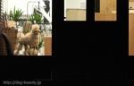 MUKUSYTON DOG GROOMING