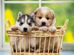 Dog Salon SOLO