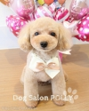 DogBeauty限定!!ご新規様限コース20%OFF♪