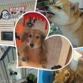 愛犬美容室QUNQUN(クンクン)