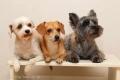 Dog Studio Maile - ドッグスタジオ マイレ -