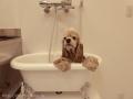Dog Salon Tiara