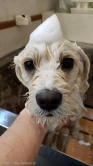 Hair  salon  SAVOIA with  DOG