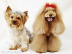 dog salon LUCIA