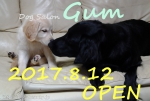 Dog Salon Gum