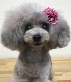 funwari cute style