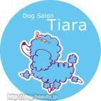 DogSalon Tiara