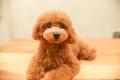 LUXBE DOG