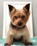 Dog Salon JILL